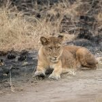 Uganda-safari-kaara-adventures